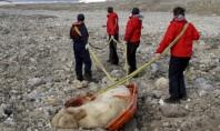 Jovem Morre Após ser Atacado por Urso Polar