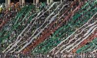 Após briga no sábado FPF proíbe Mancha Alviverde e TUP em jogos do Palmeiras